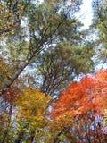 秋季森林和天空 免版税库存照片