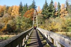 秋季森林地步行 免版税图库摄影
