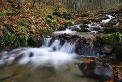 秋季森林河 免版税图库摄影