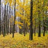 秋季森林 后秋天 阴云密布 免版税库存照片