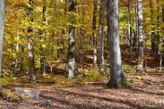 秋季森林 免版税库存照片