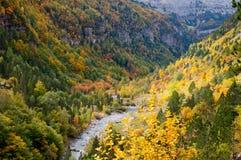 秋季森林 库存图片