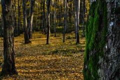 秋季森林 图库摄影