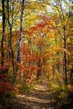 秋季森林 免版税图库摄影