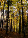 秋季森林 免版税库存图片