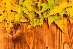 秋季概念 槭树烘干了在自然光木背景的叶子 在木纹理,拷贝的秋天五颜六色的叶子 免版税图库摄影
