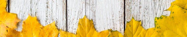 秋季槭树季节性框架横幅离开与梯度颜色在白色木背景 图库摄影