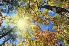 秋季横向 免版税库存图片