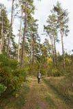 秋季步行在森林里 库存照片