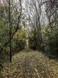 秋季步行 库存照片