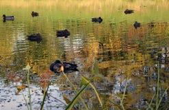 秋季池塘。 库存图片