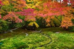 秋季的禅宗庭院在Rurikoin的日本 免版税库存照片