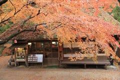 秋季的纳纳,日本茶屋 免版税图库摄影