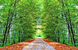 秋季的胡同 库存照片
