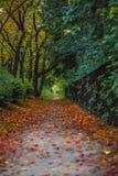 秋季的胡同 免版税库存图片