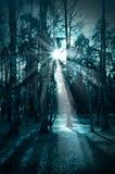 秋季的,万圣夜夜黑暗的森林 库存图片