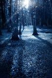 秋季的,万圣夜夜黑暗的森林 图库摄影