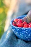 秋季红色berrys和叶子 免版税库存图片