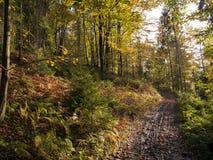 秋季美丽的森林 免版税库存图片