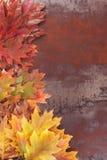 秋季背景特写镜头离开宏指令 免版税库存图片