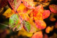 秋季自然背景 秋天明亮的叶子 库存图片