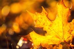 秋季色的叶子细节在阳光强度的 库存照片