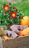 秋季花卉构成 库存图片