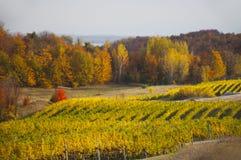 秋季葡萄园在阳光下 免版税库存图片