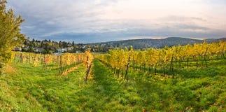 秋季葡萄园风景在维也纳 免版税库存照片