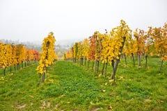 秋季葡萄园风景在维也纳 库存照片