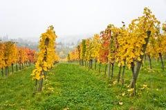 秋季葡萄园风景在维也纳 免版税库存图片