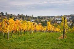 秋季葡萄园风景在维也纳 库存图片