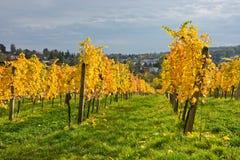 秋季葡萄园风景在维也纳 免版税图库摄影