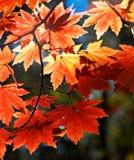 秋季装饰品 库存照片
