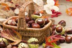 秋季装饰 免版税图库摄影