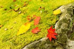 秋季静物画在日本森林里 免版税库存照片