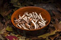 秋季静物画构成:泥罐和蜂蜜蘑菇 库存图片