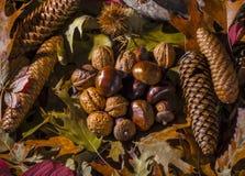 秋季静物画构成 库存图片