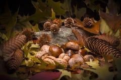 秋季静物画构成 库存照片