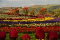 秋季颜色在Furano附近的花园里 库存图片