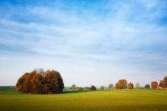 秋季结构树 免版税图库摄影