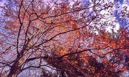 秋季结构树 图库摄影