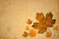 秋季黄色槭树在老被弄脏的纸离开 库存图片