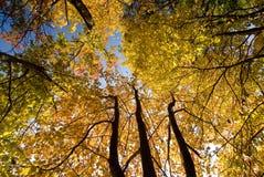 秋季 库存图片