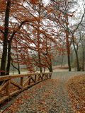 秋季 图库摄影