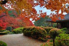 秋季Shisen从事园艺 库存图片