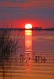 秋明州地区,俄国河Pyshma 免版税库存图片