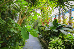 秋海棠房子内部,惠灵顿植物园,新西兰 免版税库存图片