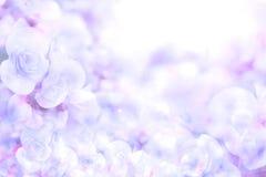 从秋海棠的抽象软的甜蓝色紫色花背景开花 库存图片