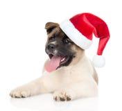 秋田inu在看照相机的红色圣诞老人帽子的小狗 查出 免版税库存照片